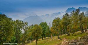 Kashmir Great Lakes Trek Soanamarg Forest