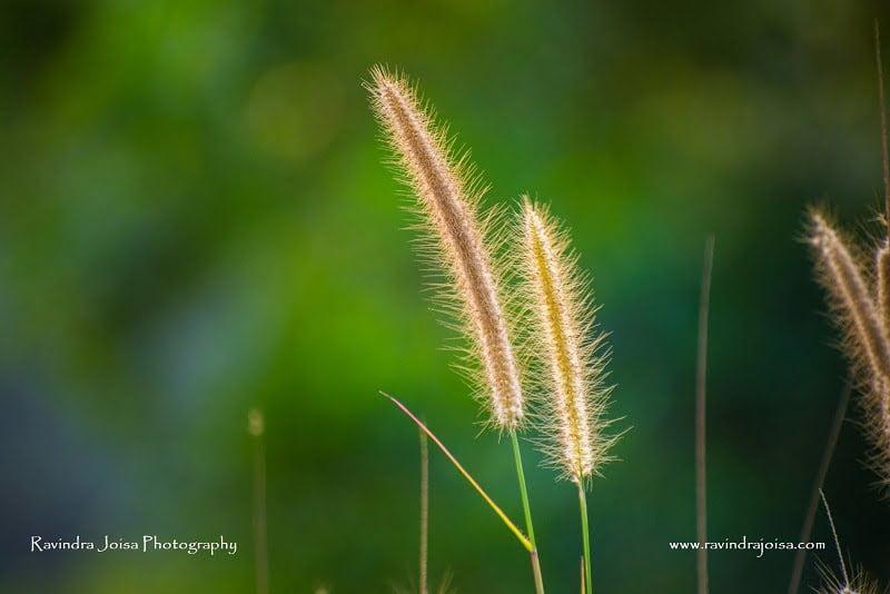 Lower aperture - Ravindra Joisa Photography